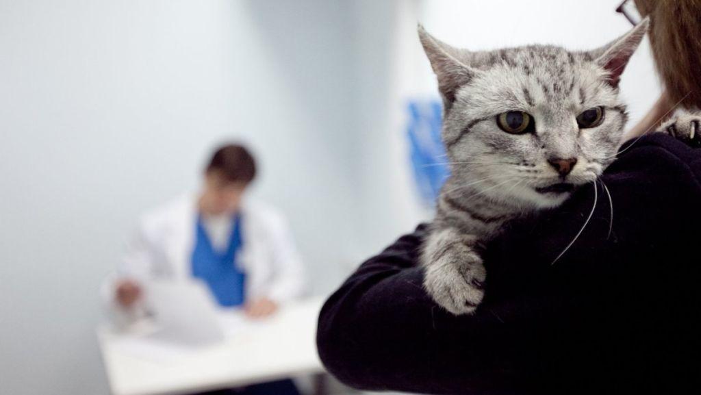 Даже о единичном приступе судорог необходимо сообщать ветеринару, который проведет полное обследование и установит причину его возникновения