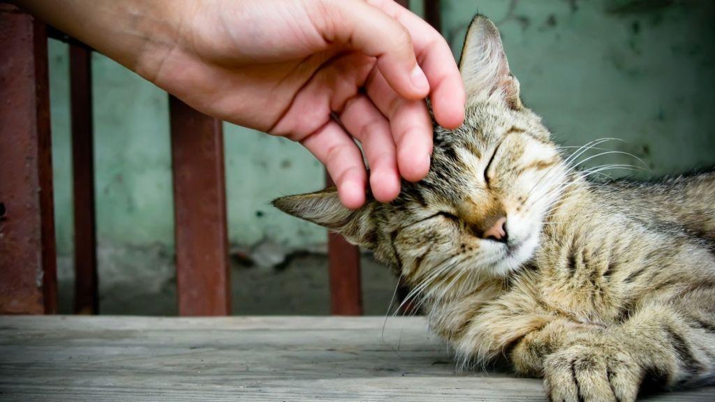 Гладить кошку возможно только в стерильных одноразовых перчатках