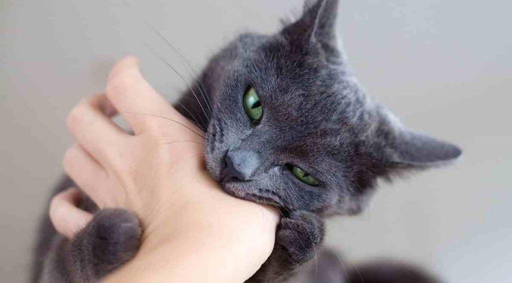 В редких случаях заражения от кошек хламидиоз протекает в виде хламидийного конъюнктивита