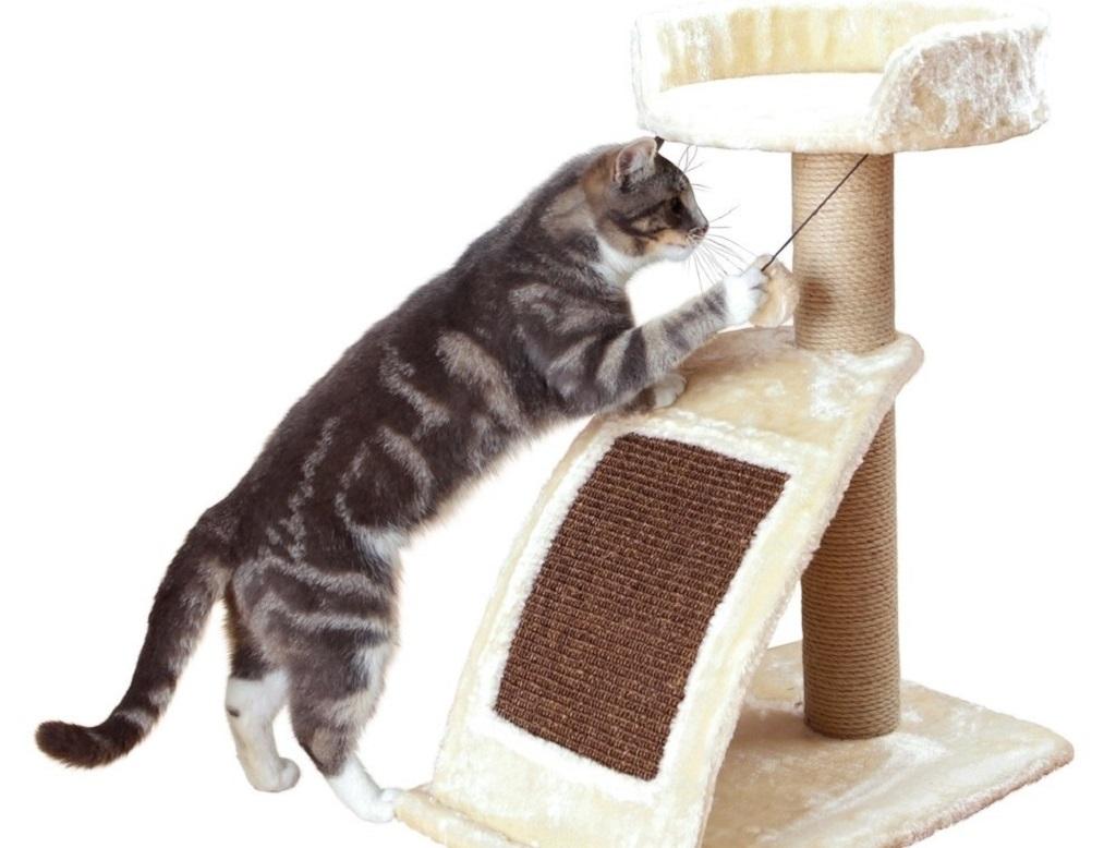 Как сделать когтеточку для котов и кошек своими руками