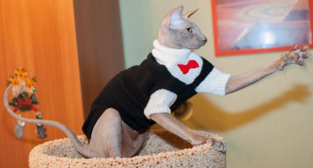 Как сшить одежду для кошек своими руками