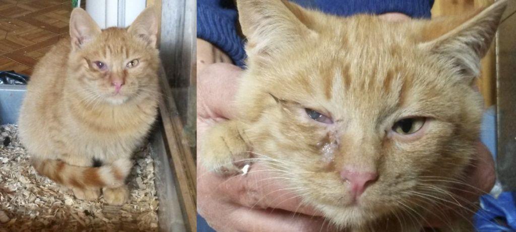 У кота ринотрохеит, глаз побелел и выпадает