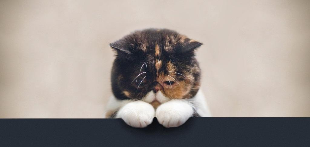 Кот у порога дома к достатку и процветанию