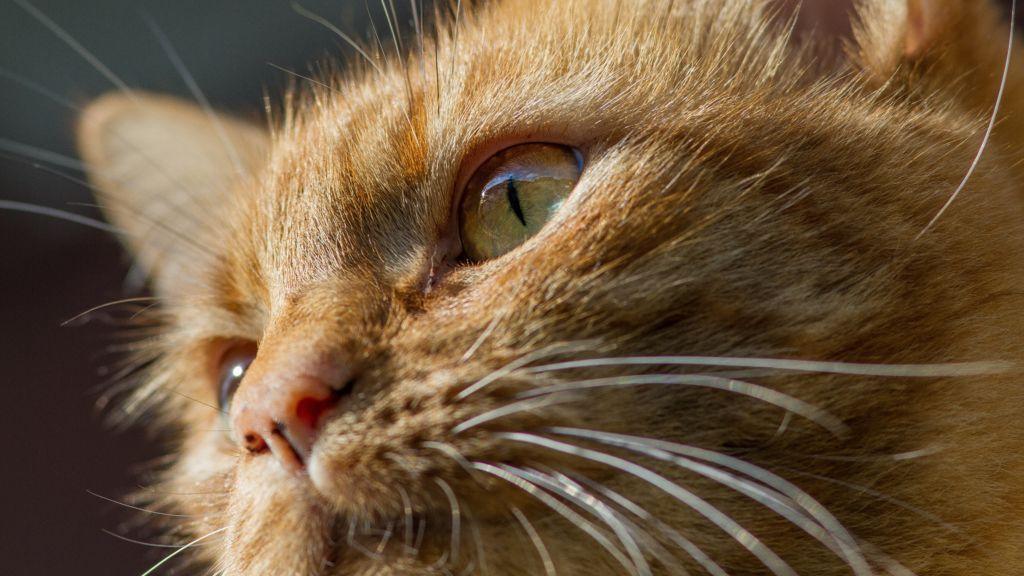 Даже незначительные изменения в окружающем пространстве не останутся для кота незамеченными