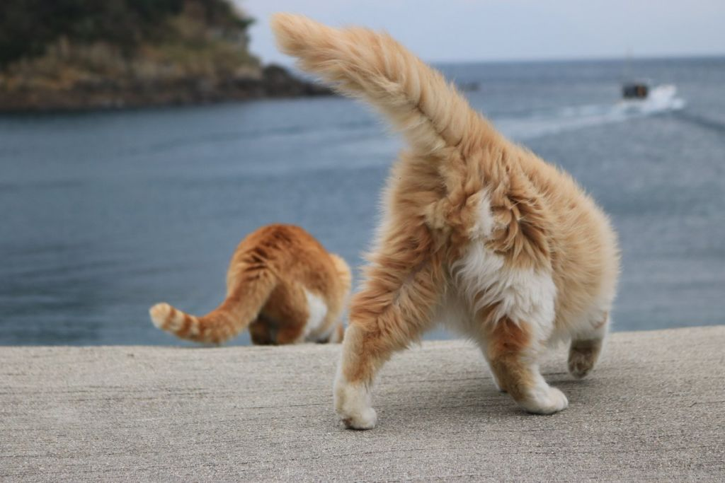 Зачем коту хвост