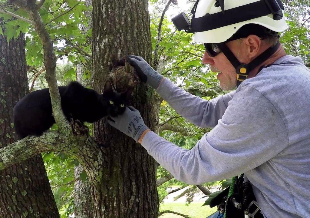Если самостоятельно снять кошку не получается всегда можно воспользоваться услугами мчс или пожарной