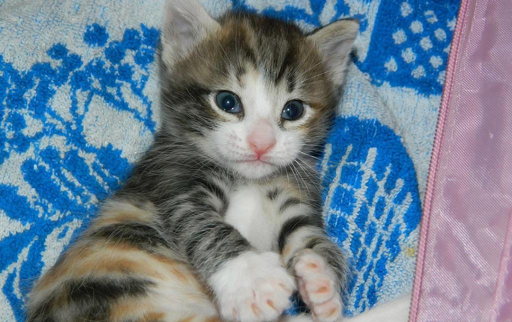 Здоровый кот после лечения