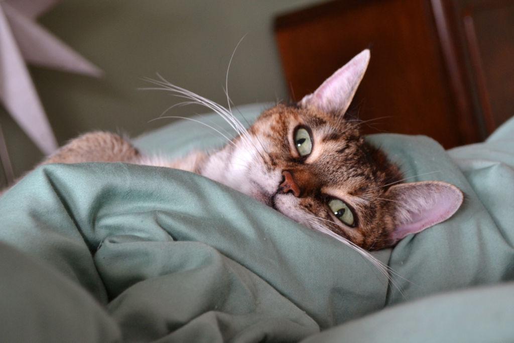 Как поймать кота или кошку на улице и как приучить котенка к новому месту жительства
