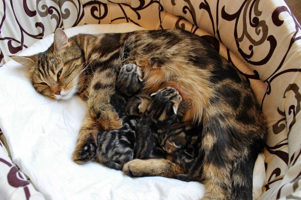 кошка кровит после родов