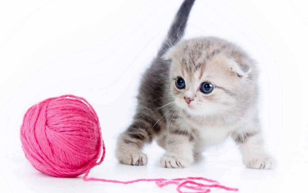 Различают ли кошки цвета и видят ли они в темноте