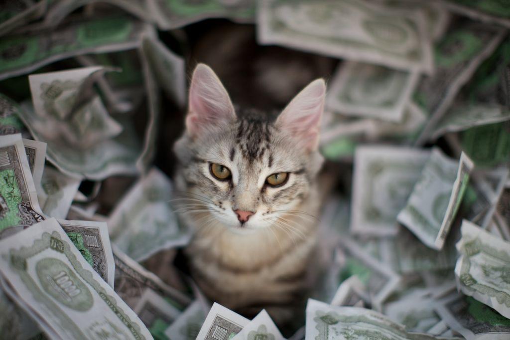 6 народных примет и суеверий связанных с котами и кошками