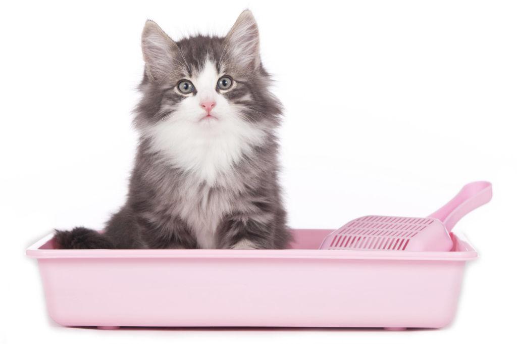 Важно обращать внимание на цвет испражнений животного при уборке кошачьего туалета