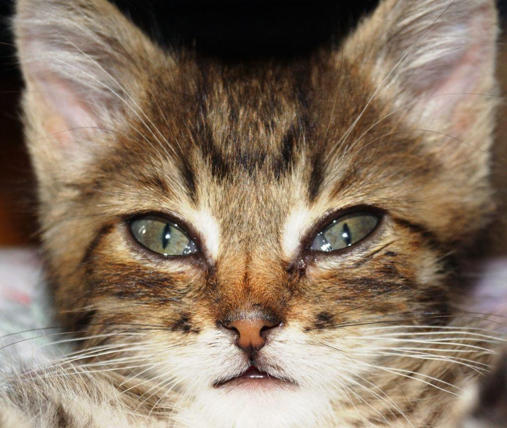 коты могут длительно время плакать после того, как наедятся сладкого