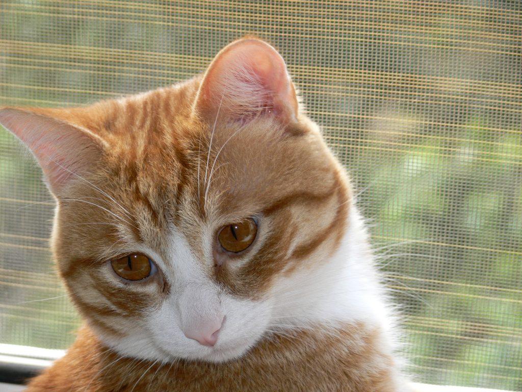 Не лечите кошку самостоятельно, ибо это может серьезно подорвать ее здоровье