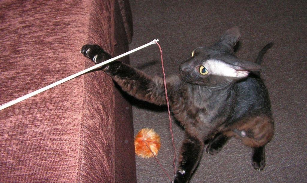 Игра кошки с помпоном