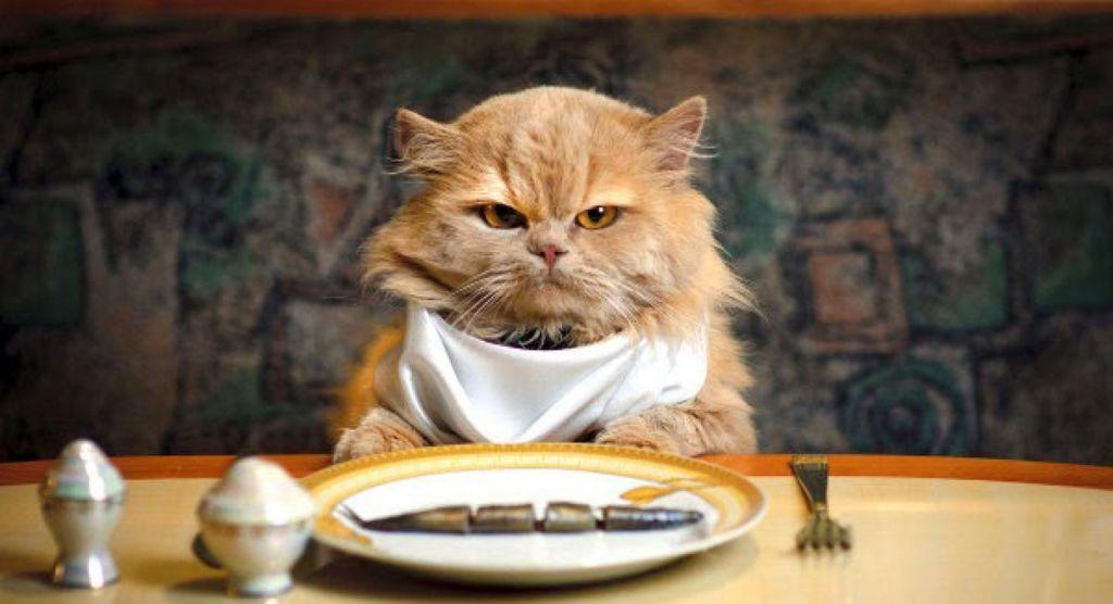 Кот стал больше есть