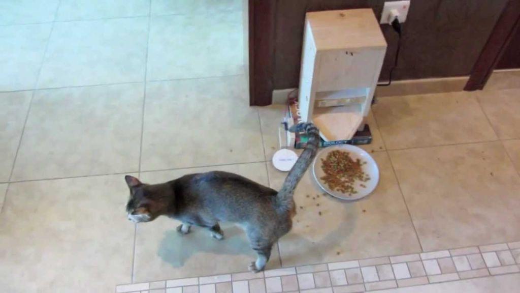 Кормушка для кота