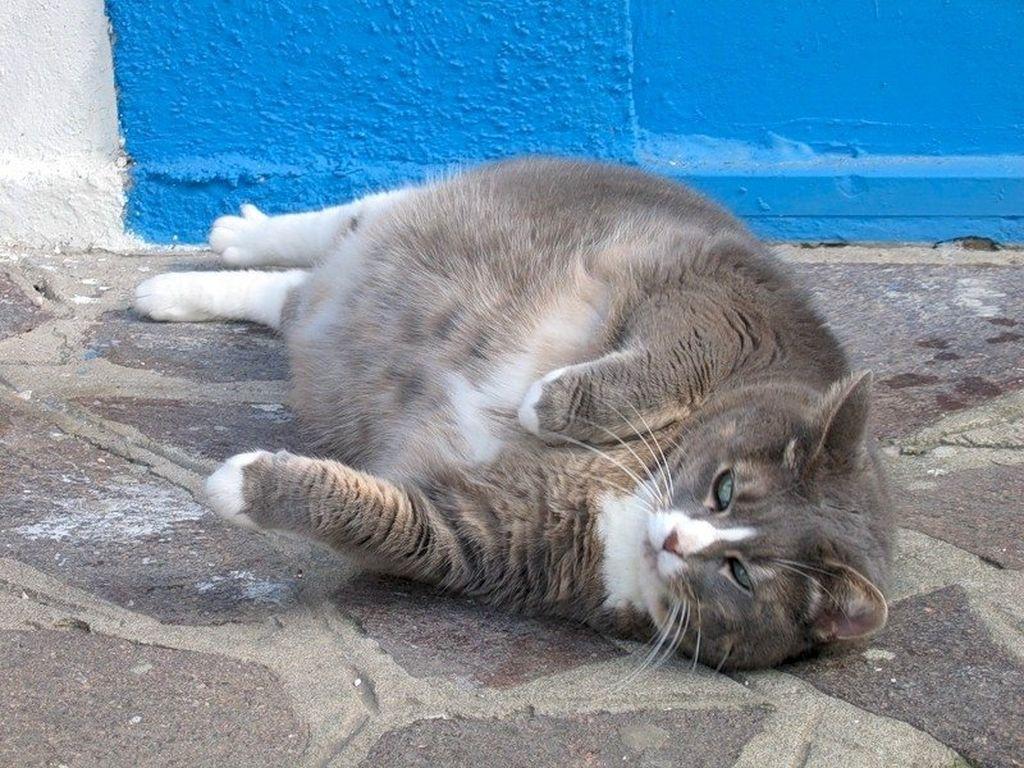 Сколько длится беременность кошки