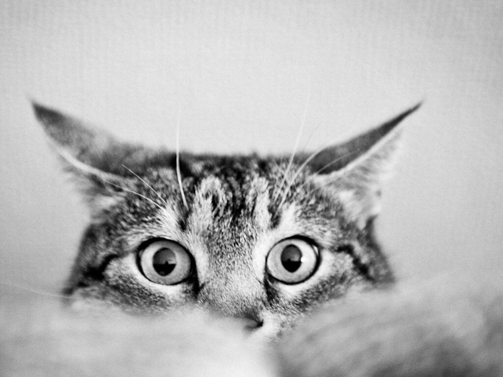 Что делать когда кот метит в доме и как отучить