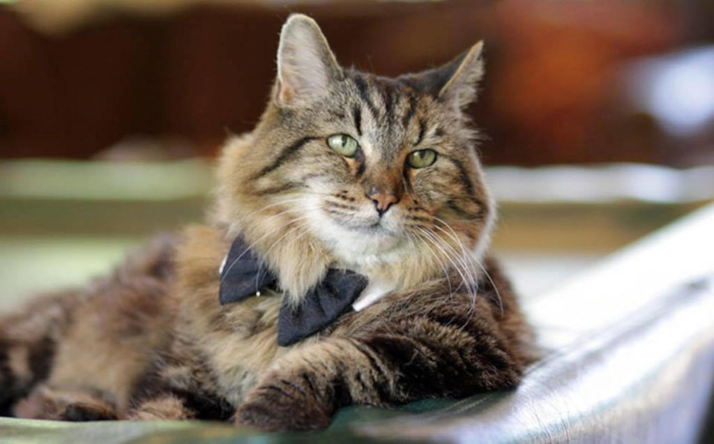 Описание самых умных пород котов