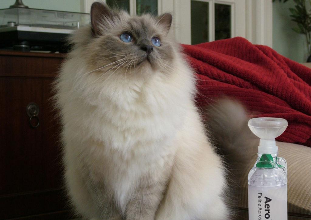 Ингалятор для кошки
