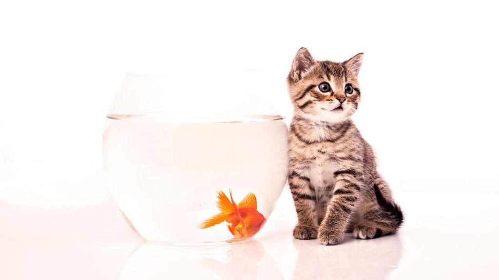 В сырой рыбе содержится фермент тиаминаза, разрушающий витамин В1