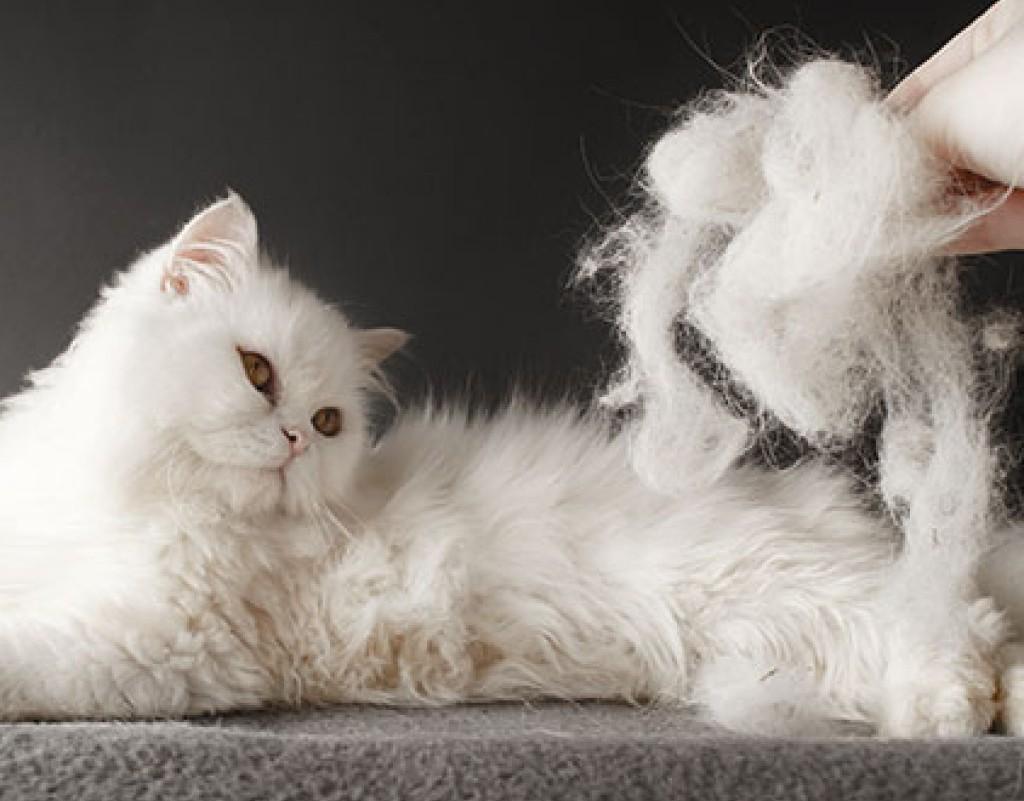 Что делать, если кот или кошка сильно линяет