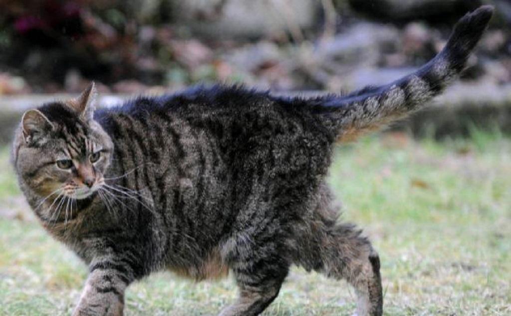 Люси-самая старая кошка в мире