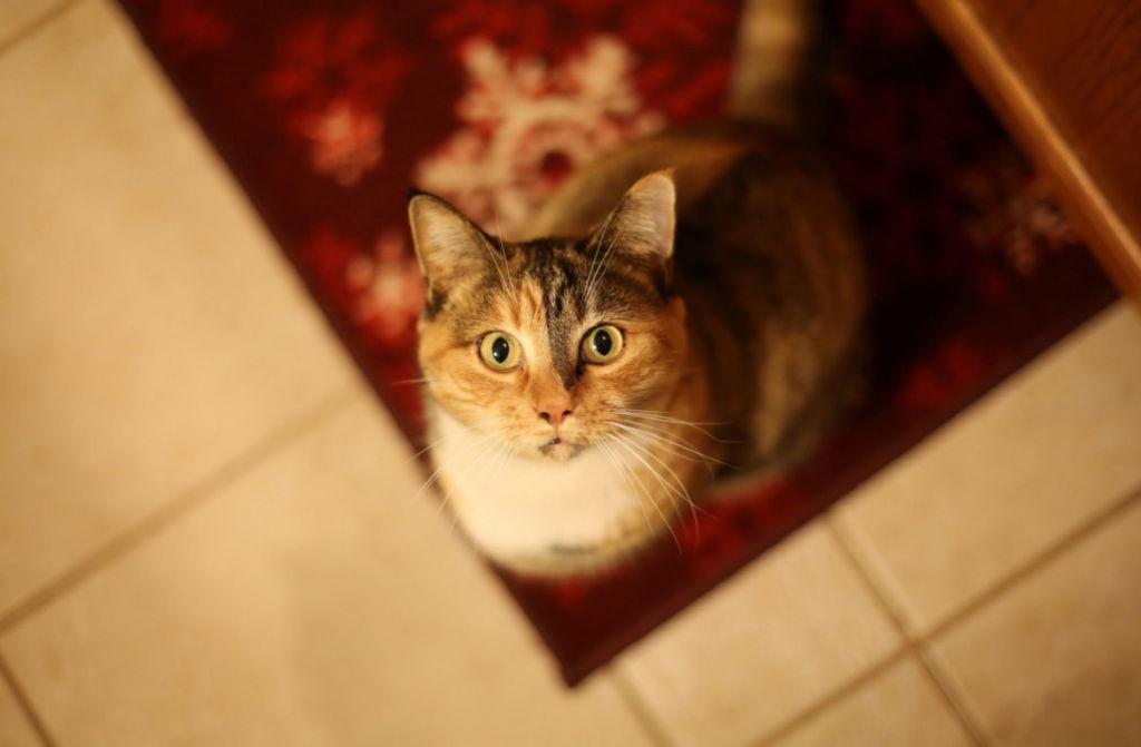 Где у кошки холка