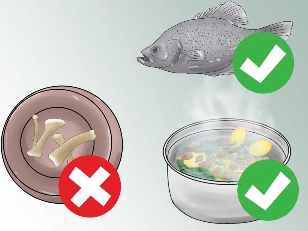 В холистик кормах используют продукты, пригодные для питания человека