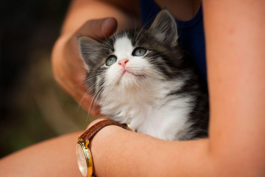 Глистогонные для кошек