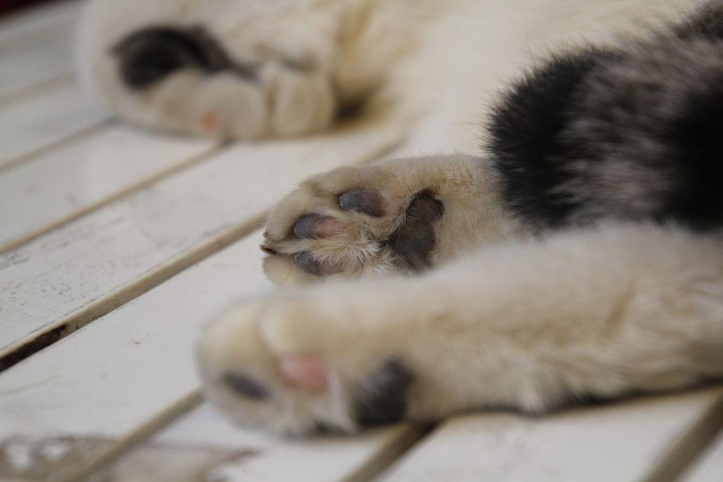 Кошка хромает на лапу