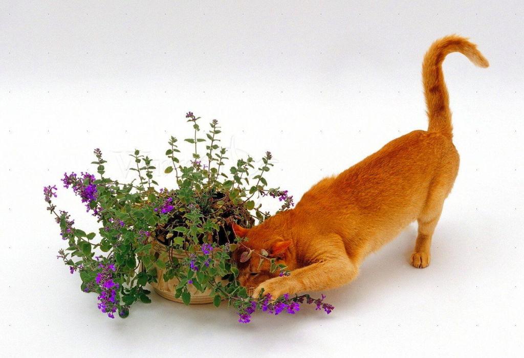 4 вещи, которые любят кошки больше всего
