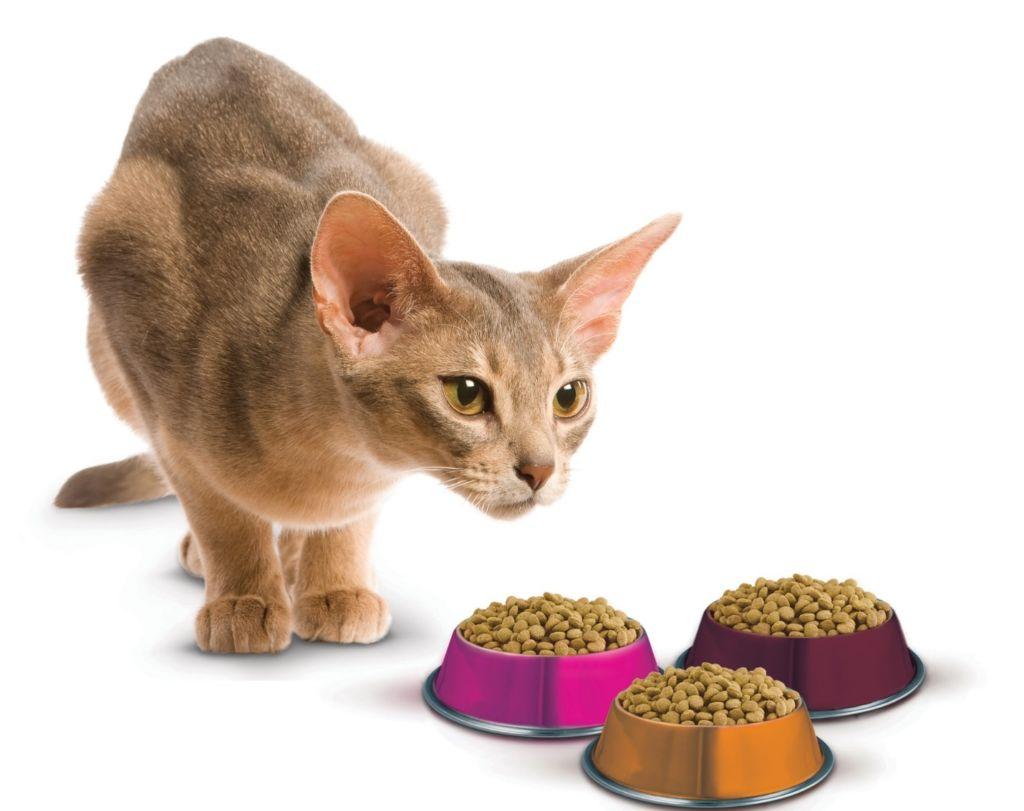 При питании кошки сухим кормом питомец нуждается в гораздо большем количестве жидкости