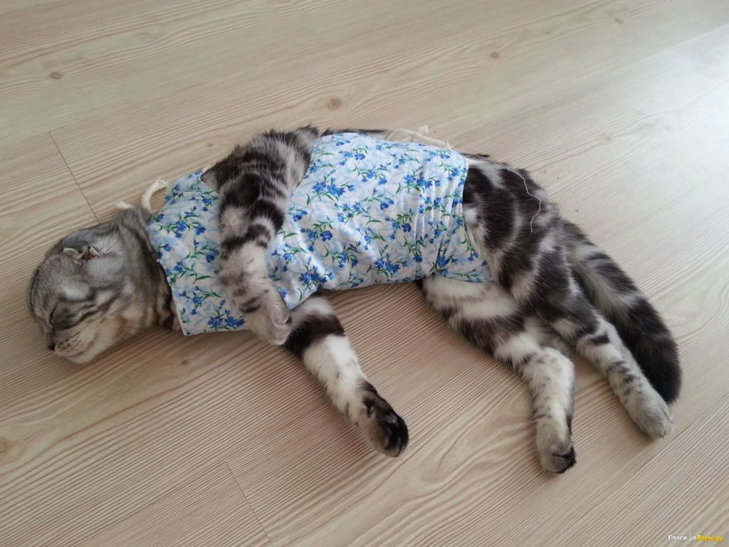 Попона нужна кошке чтобы предотвратить разлизывания ран
