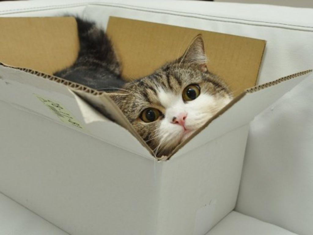 Любовь к коробкам у кошек