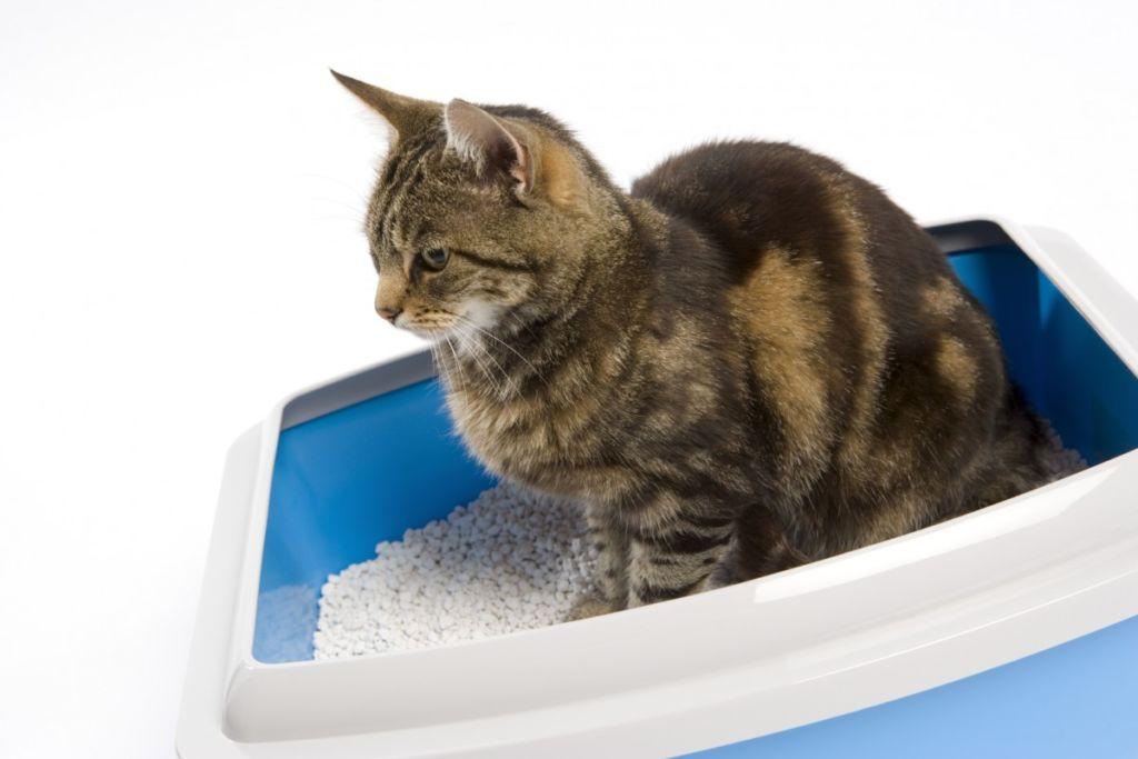У взрослых кошек своенравный характер и не всегда все проходит гладко