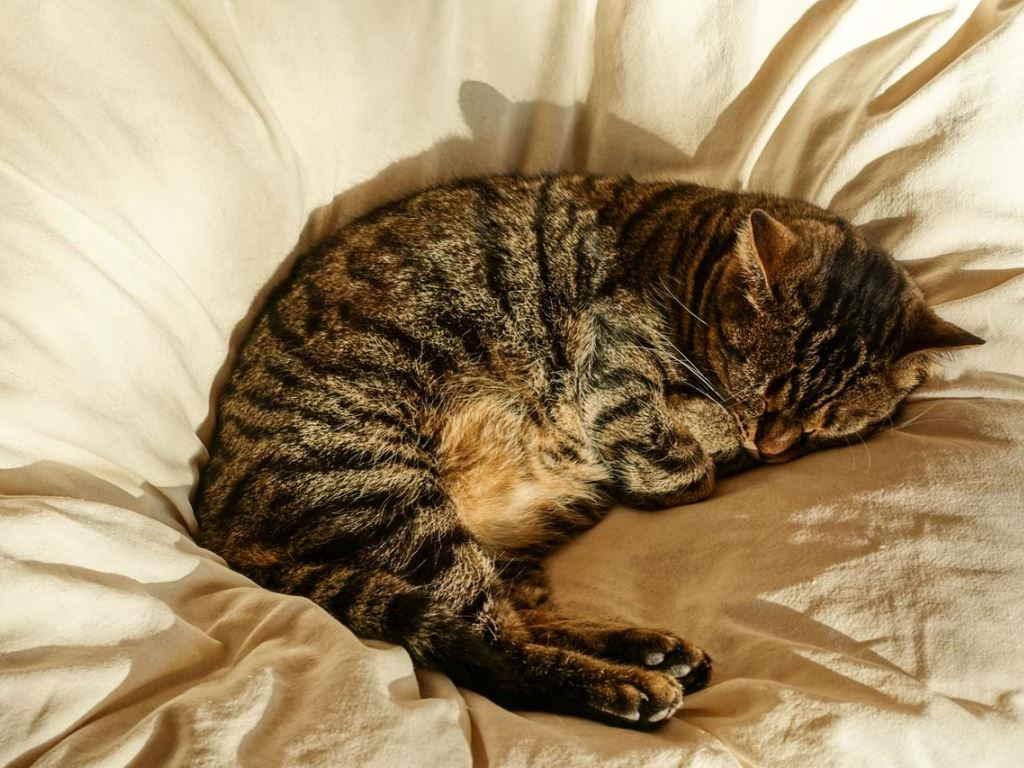 Стареющая кошка может утрачивать приобретенные ранее навыки, в том числе нередко забывают о своем лотке