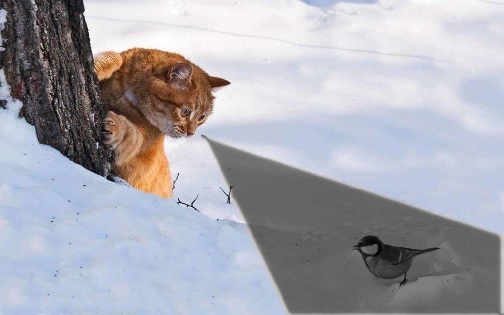 Угол зрения у кошки достаточно широк и может достигать 185 градусов
