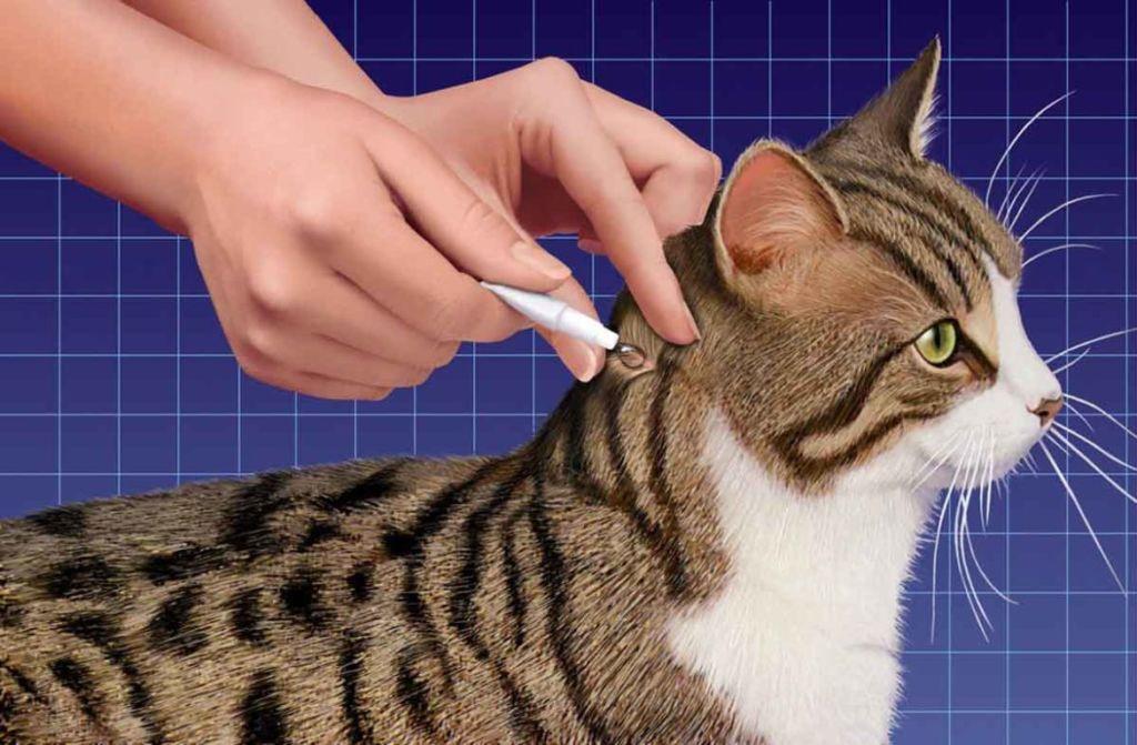 Лечение власоедов у кошки предусматривает использование противопаразитных препаратов