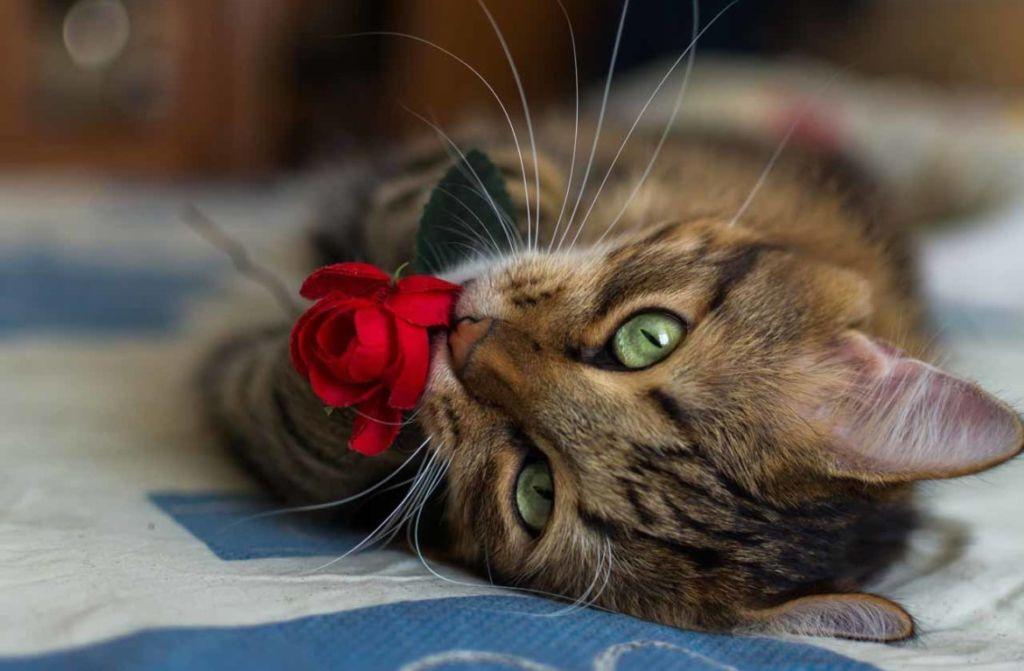 Кошки имеют цветное зрение, но не такое яркое, как у человека