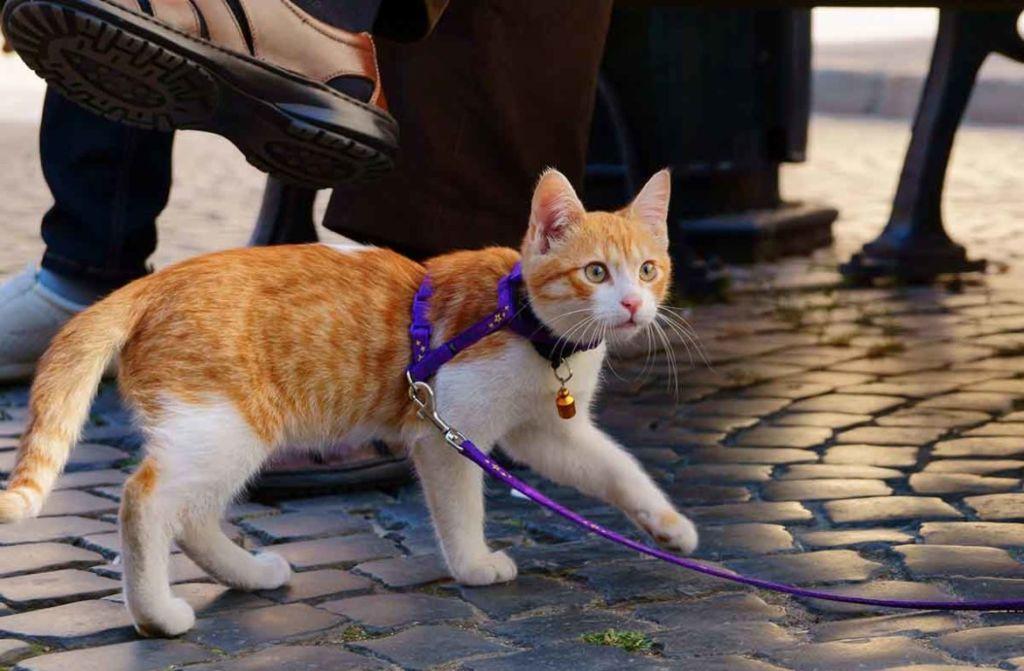 4 вида шлейки для кота
