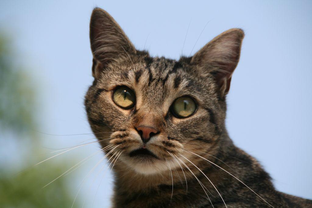 Кошки обладают отменным здоровьем и смекалкой