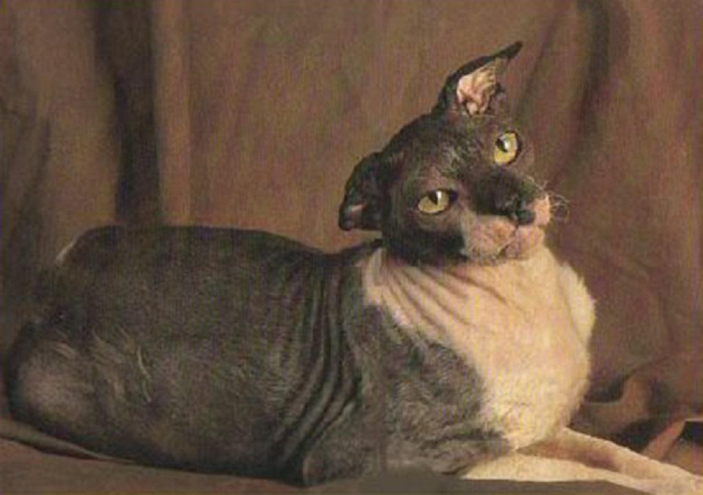 Кошка-долгожительница Гранпа Рекс Аллен