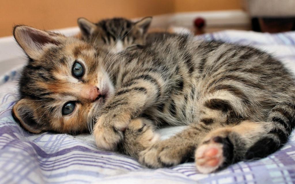 6 причин, почему кошка гадит на кровать и как отучить