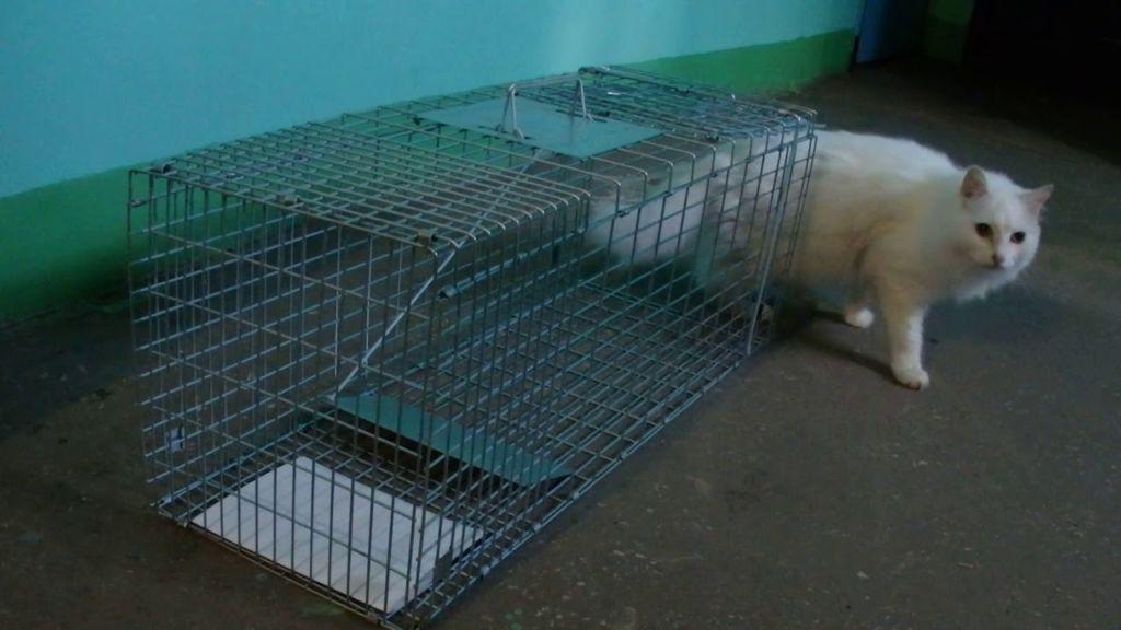 Клетка для отлова диких кошек
