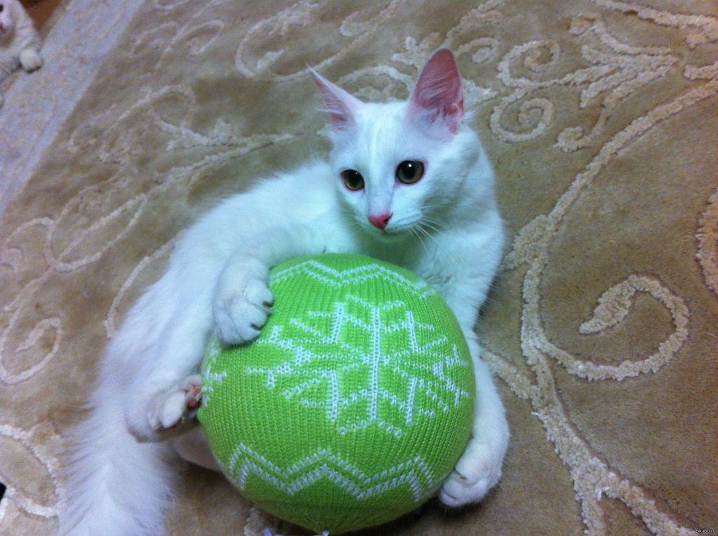 Необходимо постараться отвлечь кошку, например, любимой игрушкой