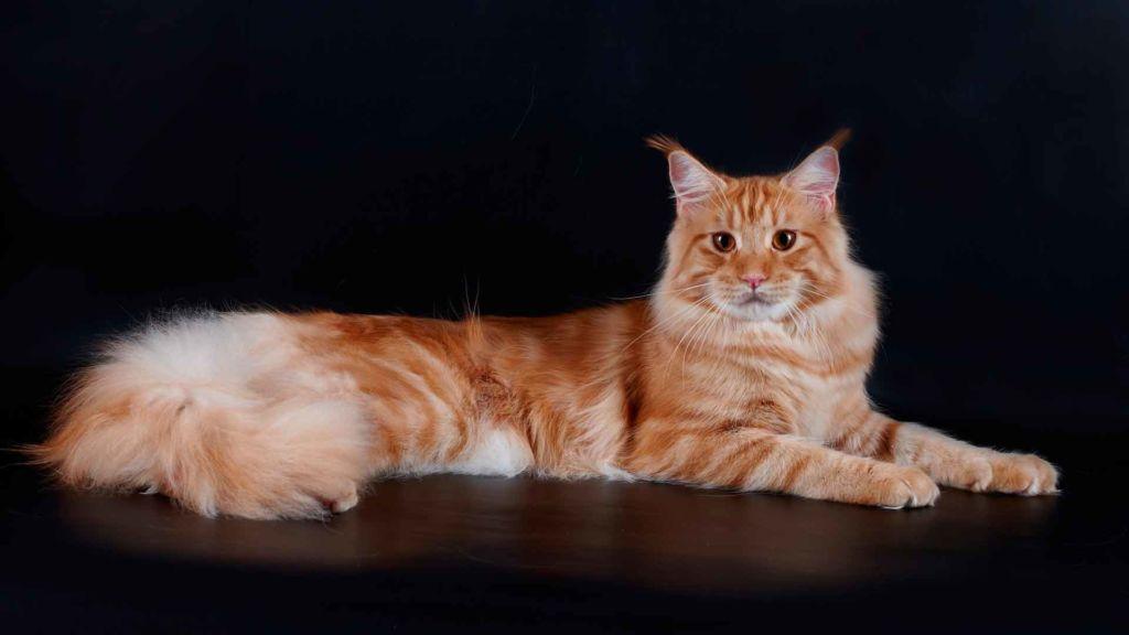Для здоровья шерстки и укрепления иммунитета котам необходимо принимать витамины