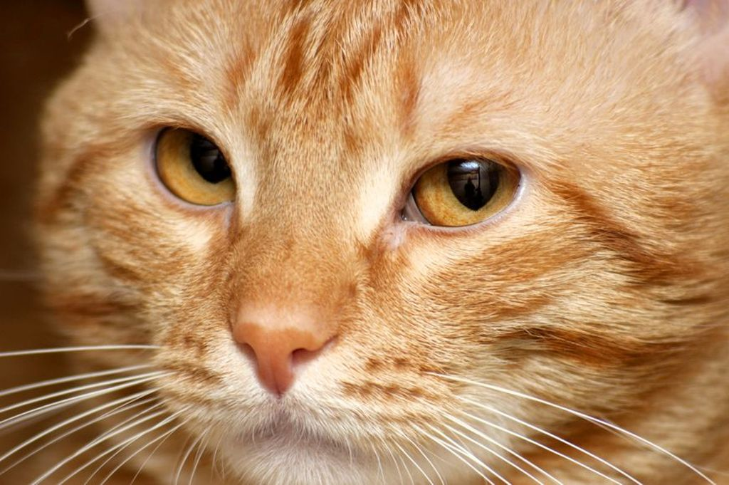 В некоторых случаях, когда кот не мурлычет, нужно обеспокоиться