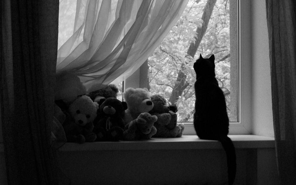 Кошки могут подавать голос при недостатке внимания